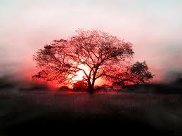 sunset05
